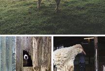 Yarn Farming / Any basic information dealing with having a farm and raising fiber animals.