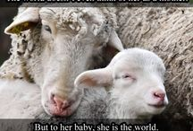 """Veganism / """"My body will not be a tomb for other creatures.""""   -Leonardo Da Vinci"""