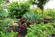 Gardening in the Shuswap