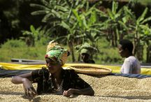 Africa and coffee / culture, people and coffee in Africa