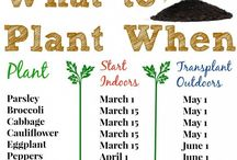 when to plant veg