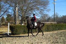 """Green Horse Class. 2011 videos! / """"Going back in time.  Now you can what we did to teach our than, """"Green Horses"""" the beginnings of straightness, impulsion and lifting their backs. To do this we added ground poles"""""""