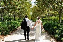 Winery Weddings / Winery Weddings around South Australia