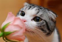 Puss in moods
