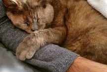 My cats - Briciola & Muffin / my cat