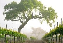 Wine Country in my backyard!