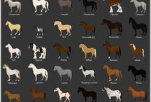 horse Breed lists
