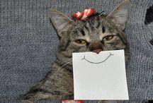 Mens ñ Cats