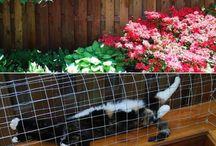 back yard fun things / by Leslie Brence-Pendergrass
