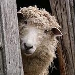 Farm Animals / by Vicki Benes
