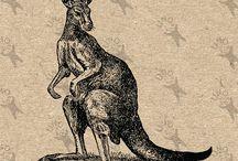 Vintage clipart - Animals