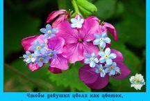 Цветы. Статус / Тот, у кого в руках цветы, не совершит дурного…
