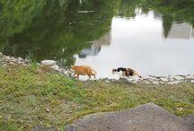 Cats / Many cats enjoy their life in Yokohama or Tokyo.