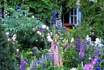 Hageplanter / Div. vedr. planter, hagemøbler, innredning