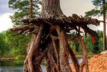 Trees / by Decadent Daylilies - Daylily Nursery