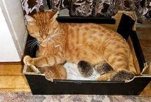 Katt med igelkottar