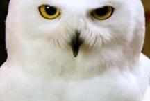 owls / by Megan Hale