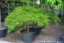 Garden plants / by Linda ...