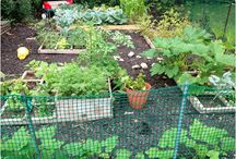 Gardening with Children / Inspiration and ideas for fostering a love of nature and gardening in children.