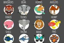 Animal body parts