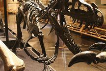 Skeletons-dinosaur.