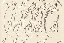 pheasant / by :D