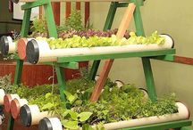 Hobi bahçeciliği