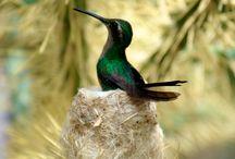 Hummingbirds / by Joan Duffy