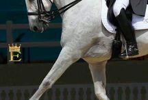 My ❤️for LUSITANO / My dream horse..