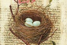 vogels en nesten