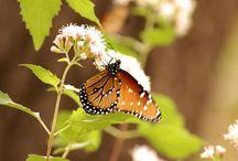 Florida Everglades Wildlife / Everglades National Park Wildlife compilation.