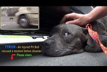 Erityisen sydämeenkäypiä koirien rescue-videoita