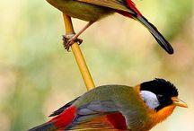ptaki,owady i inne