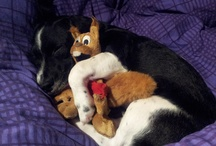 Doggy Loves