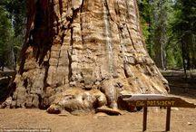 paixao: árvores
