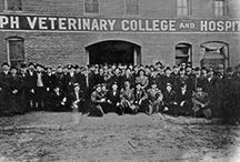 Veterinary Colleges / Images and historical resources for veterinary colleges