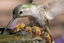 Păsări exotice