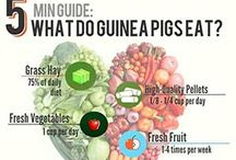 Awesome Guinea Pig Stuff / Great guinea pig info.  Guinea pig diet, care, behavior, pictures and more.