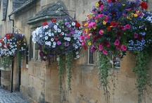 Hanging Baskets & Container Garden