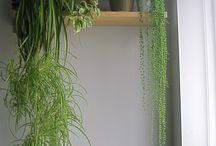 癒しの観葉植物たち
