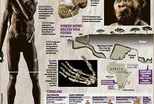 Biology : Human evolution