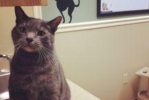 Cat friendly practice. / Veterinary