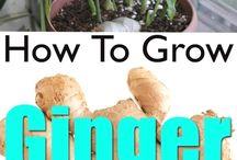 grow in a pot