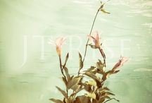 Flower art / Flowers underwater prints and canvases for sale