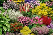 A - Front Yard Gardens / by Betsy Pedersen