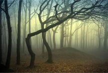 Trees, my love