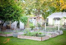 yard and garden / by Micki Thompson