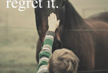 Life around horses