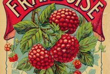 fruits vegetables old labels / old memorabilia