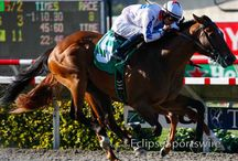 Kentucky Derby 2014 Contenders / It's never too early to start tracking Derby contenders!
